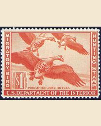 #RW11 - $1 White Fronted Geese